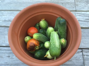 The twins & Cindy are going to have to do the harvests for 10 days. Make pickles out of those Cucumbers.