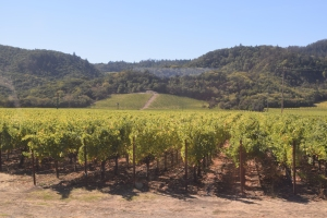 We roll by many vineyards, some quite famous others just scenic. Leisurely pace is perfect.