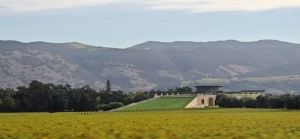 Here's the famous Opus One Vineyard - a combo of Mondavi and Rothschild of France. Snooty and expensive, but scenic.
